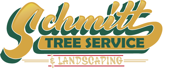 Professional Tree Removal And Landscaping Services