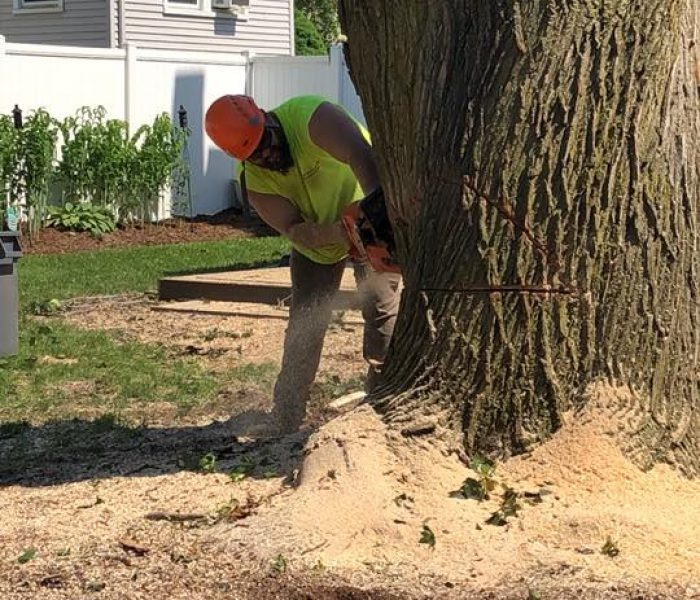 Man cutting large tree trunk with chainsaw