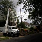 Tree being carefully removed from around power lines