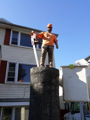 Man standing on tree trunk with chainsaw
