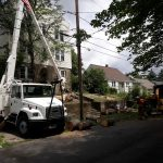 Tree carefully being remover from around power lines