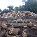 Large pile of chopped and split wood