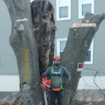Man with chainsaw standing next to large tree stump