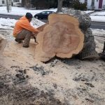 Man crouched next to large cut section of tree trunk