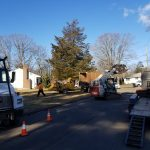 Tree removal worksite with equipment